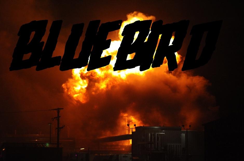 bluebird_promo.jpg
